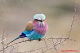 South Africa Birds