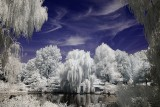 Mt. Auburn Cemetery - Infrared Perspective