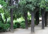 Alhambra Trees.jpg