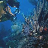 Diver Looking at Soft Corals