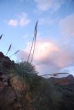 Arizona Vegetation