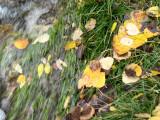 Fall Leaves Swept Away