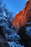 A Frosty Morning in Zion