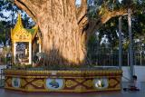 by the Bodhi tree