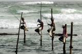 Welligama's famous stilt fishermen