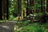 Portumna Forest Park.