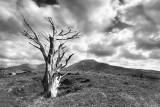 Connemara National Park BW