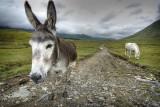 Meet Donkey:)