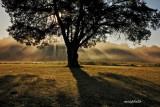 Shiloh Fog