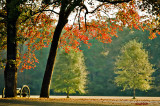 Autumn Morning