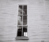 Shady Window