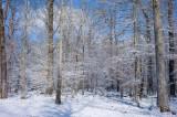 Woods in Winter