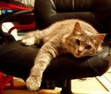 the new boss in his new chair.jpg