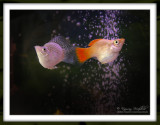 Animals/Birds/Fish Kingdom