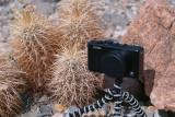 Sigma Roams Death Valley