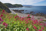 Spring Wild Flowers over Houghton Bay