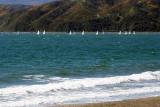 Yacht race off Seatoun