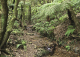 Otari Reserve