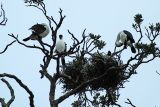 Shags Nest