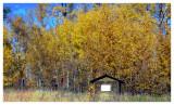 October 1, 2008 --- Beaver Lake, Alberta