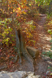 trail in th eforest