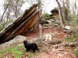 My dogs Mally and Macy enjoying the West Pinnacle trail