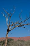 Sossusvlei Namibia Tree Moon
