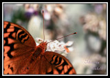 IF I COULD FLY_8366-L.jpg