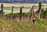 DOG-IN-LONDONDERRY-N-IRELAND_4645.jpg