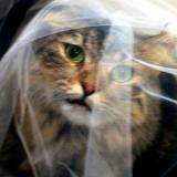 WHAT DO YOU MEAN IT IS NOT MY VEIL !! 2856 a.jpg