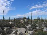 Rocks and Cactus