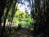 Bamboo Clearing