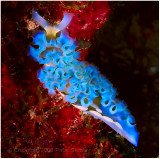 Curacao underwater, 2007