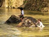734_s-2720_bathing the elephants_Sam-Joy.jpg