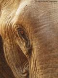 734_s-2763_wisdom in the eye-elephant.jpg