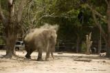 734_s_9187_elephant snadbath.jpg