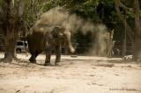 734_s_9188_elephant sandbath-2.jpg