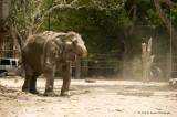 734_s_9190_elephant sandbath 3.jpg