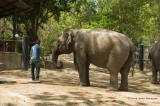 734_s_9208_elephant drinking.jpg