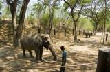 734_s_9210_elephants.jpg