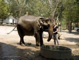 734_s_9216_elephant shower.jpg