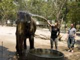 734_s_9219_elephant shower-Marc.jpg