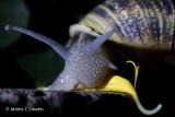 Argentina invertebrates