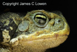 Argentina & Chile reptiles and amphibians