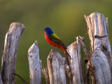 South Llano River State Park -- Birds and Wildlife