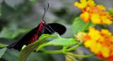 Papillons en libertés