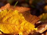 2008-10-23 Fall