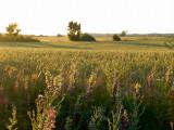 2010-07-18 Field