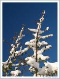 Snow on branch