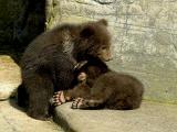 2006-05-07 Small bears fight